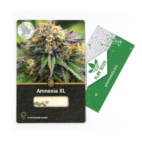 Купить стакан травы Amnesia XL