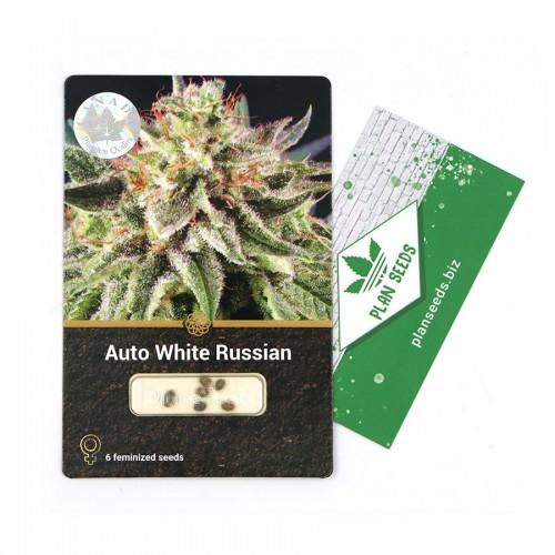 Купить стакан травы Auto White Russian