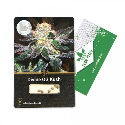Купить стакан травы Divine OG Kush