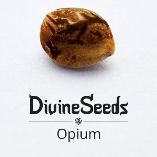 Купить стакан травы Opium