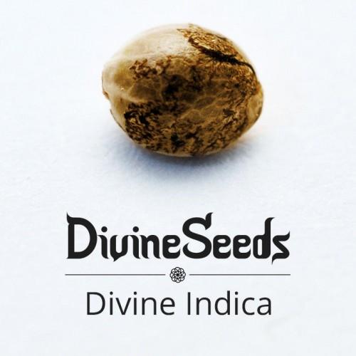 Купить стакан травы Divine Indica