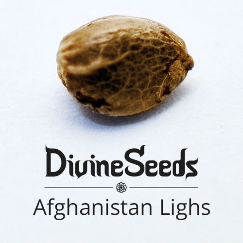 Купить стакан травы Afghanistan Lights