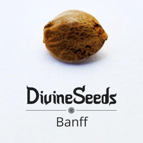 Купить стакан травы Bаnff