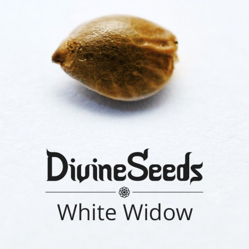 Купить стакан травы White Widow