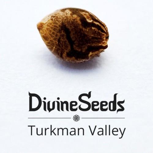 Купить стакан травы Turkman Valley