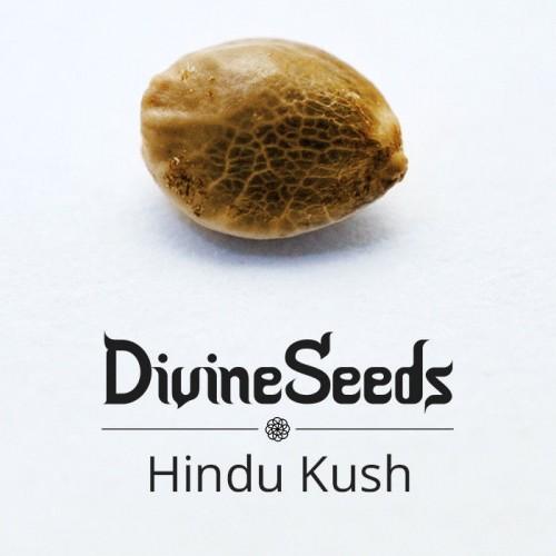 Купить стакан травы Hindu Kush