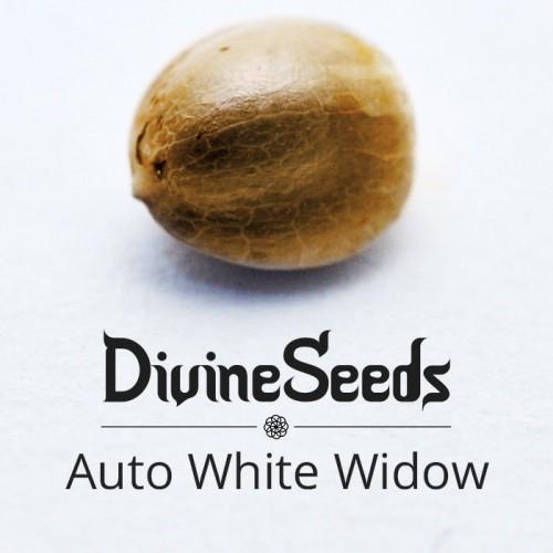 Купить стакан травы Auto White Widow
