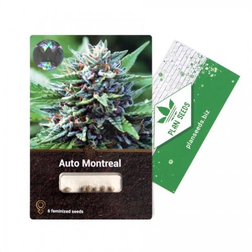 Купить стакан травы Auto Montreal