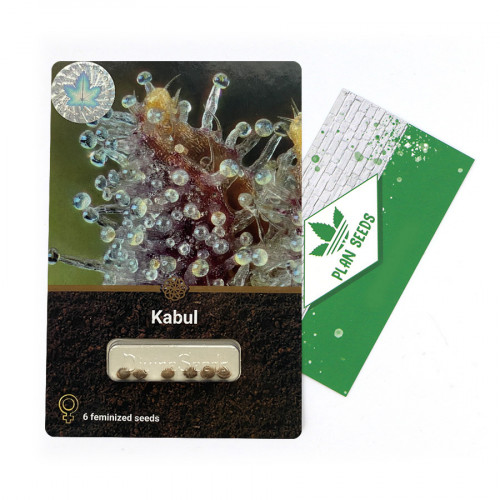 Купить стакан травы Kabul