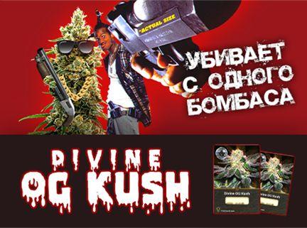 Divine Kush